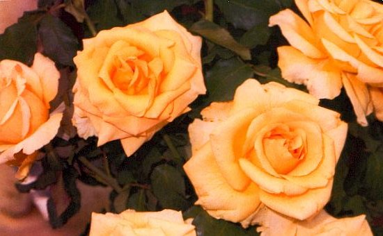 Long Stem Yellow Rose